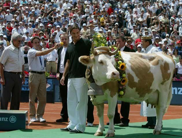 Federer-Gstaad-cow